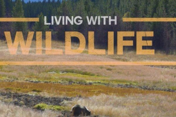 VIMFF-living-with-wildlife_600x600