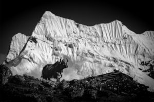 VIMFF 2018 photo comp Animal Bryce Brown Khumbu Valley