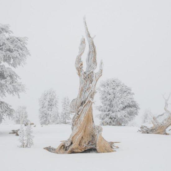 treeline vimff 2019 FEATURED