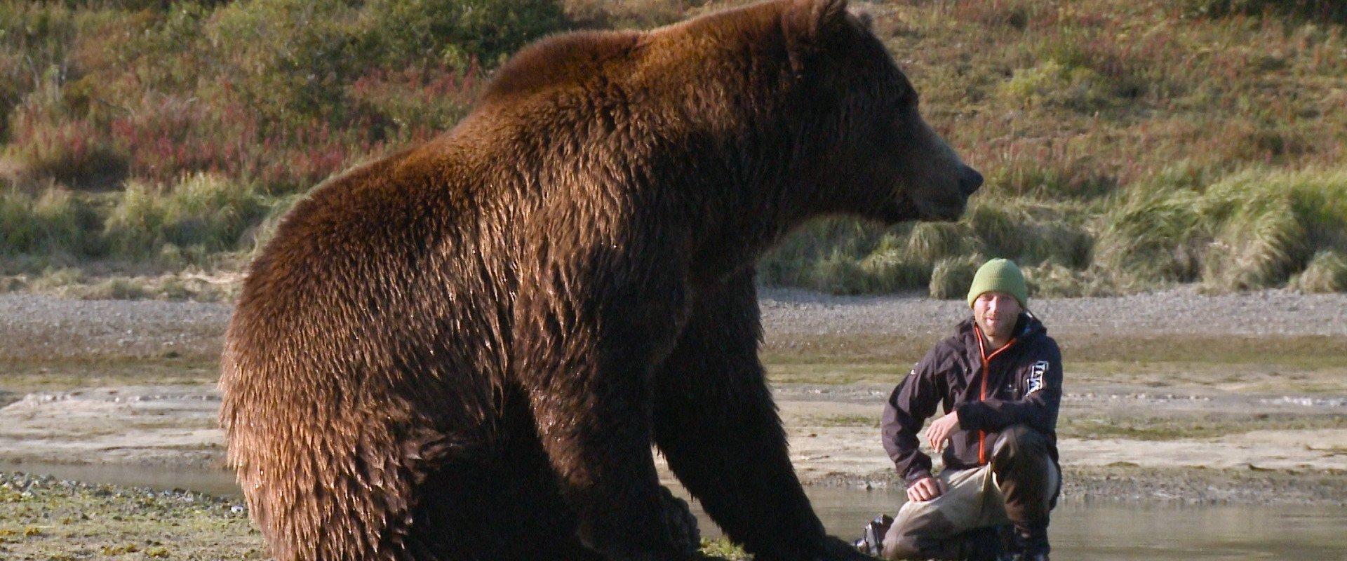 vimff bear like background