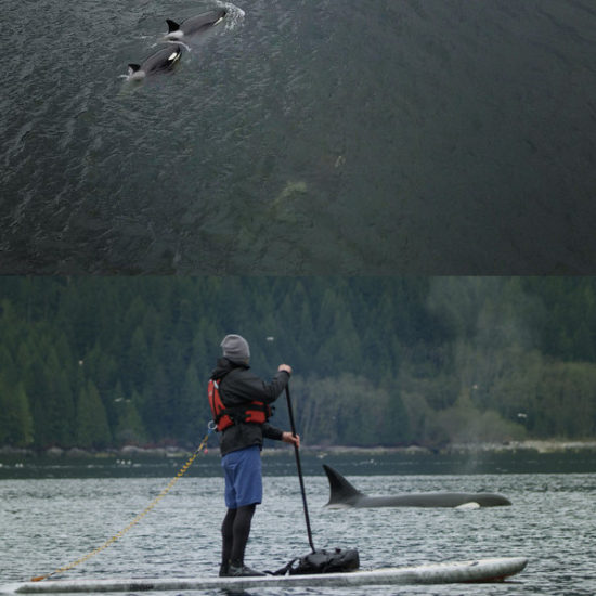 vimff howe sound featured